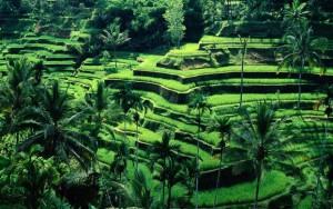 Bali beautiful nature