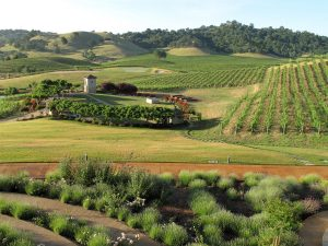 Hestan Vineyards Estate 1