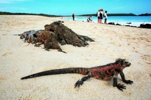 Galapagos Island tourism