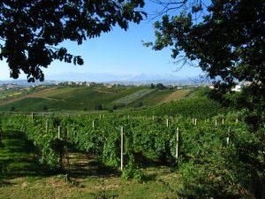 sardinia-wine-country