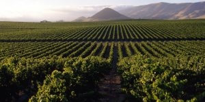 San Luis Obispo wine farms