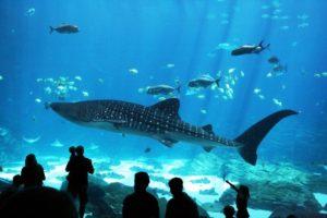 Georgia Aquarium whales