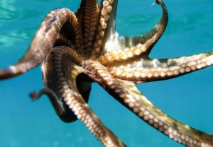Octopus_Manta-Resort