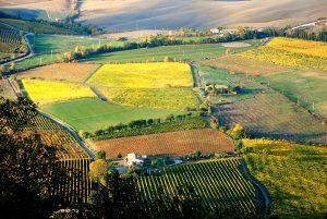 Montalcino-Wine-Tour