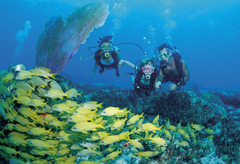 Bahamas Diving