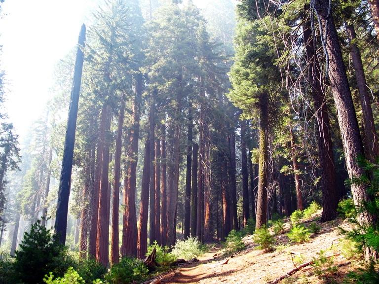 Redwood Canyon Trail