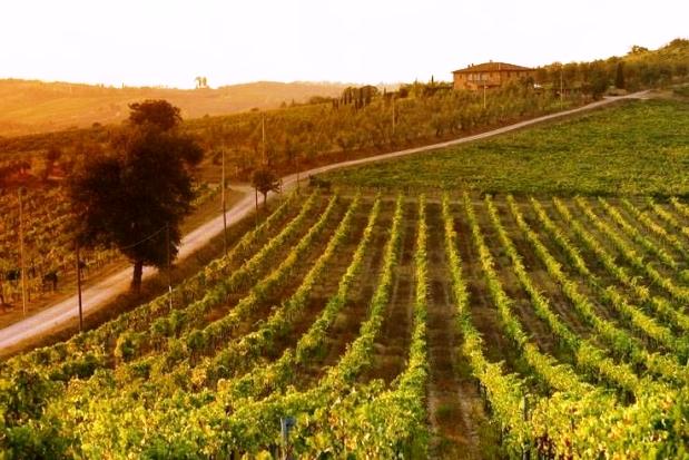 Campania wines Italy