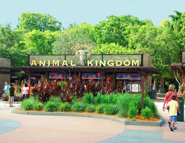 Disney Animal Kingdom