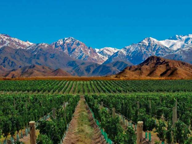 mendoza_argentina_vineyards