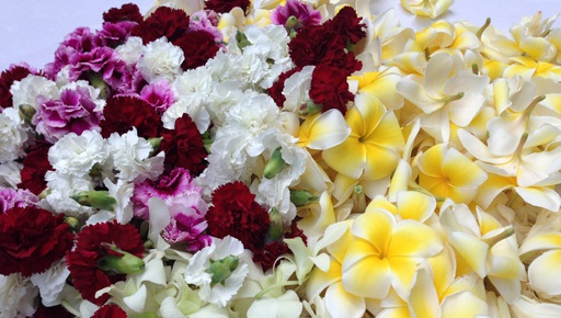 Spectacular flowers for lei-making